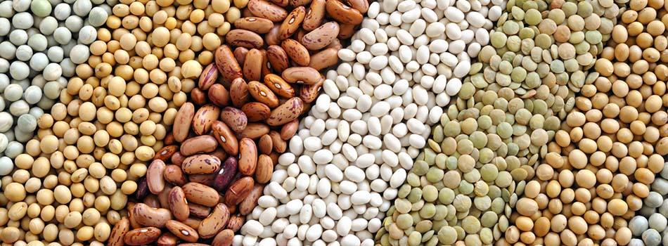 Alimentos para perder peso. Legumbres