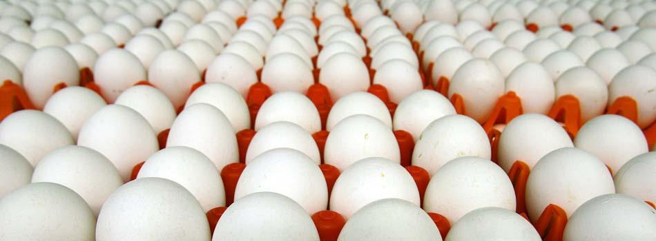 Dieta rica en proteínas - Huevos