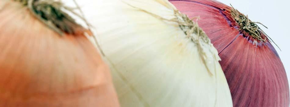 Cebolla beneficios y riesgos para nuestra salud. Tipos de cebollas